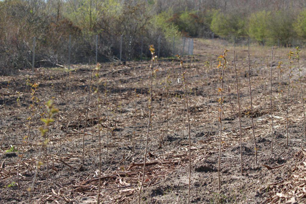 Frühjahrspflanzung 2021 in Peres